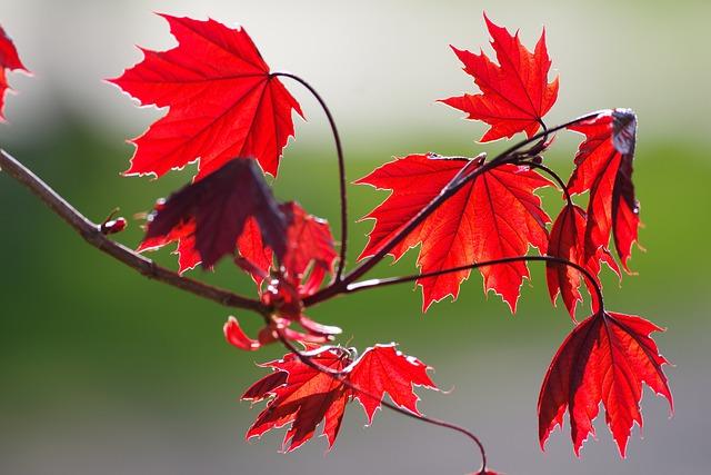 Un giorno d'autunno